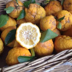 Organic Bush Lemon's (3)